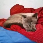 Noelle the Cat